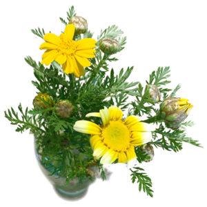 美里歯科の患者様からいただいたお花
